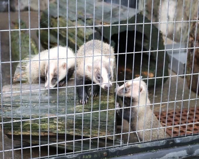野毛山動物園_b0287468_23305240.jpg