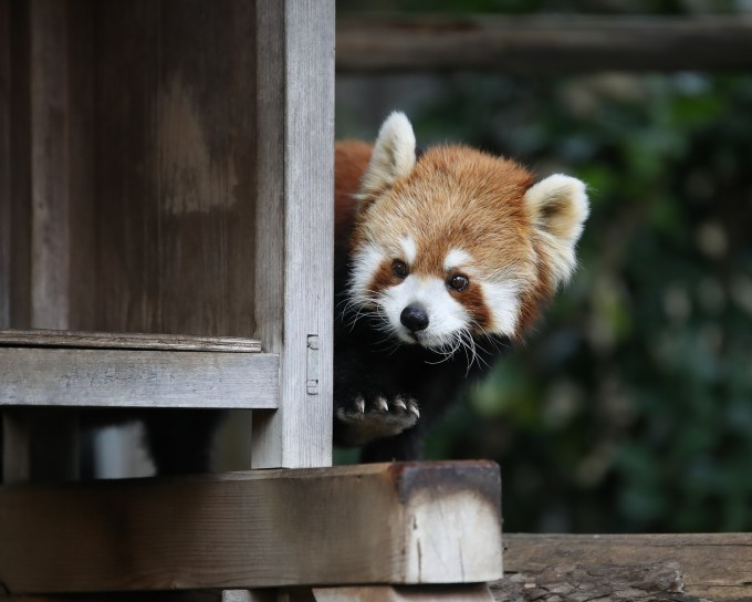 野毛山動物園_b0287468_23313555.jpg