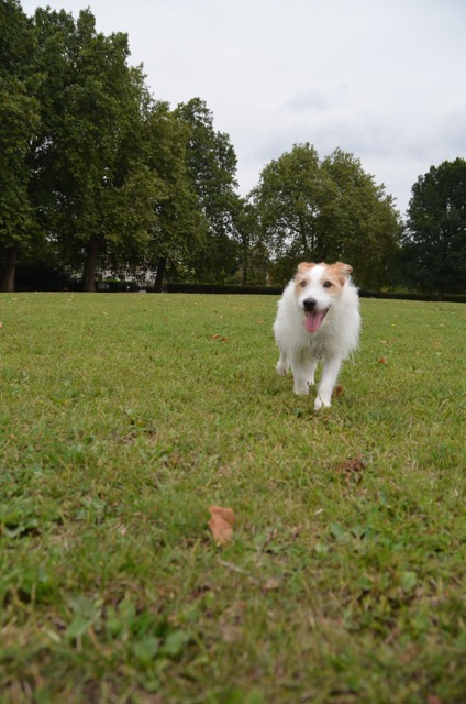 2度目のイギリス旅レポート その2 (ロンドンで犬と散歩)_c0099133_1322204.jpg