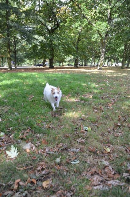 2度目のイギリス旅レポート その2 (ロンドンで犬と散歩)_c0099133_13225840.jpg