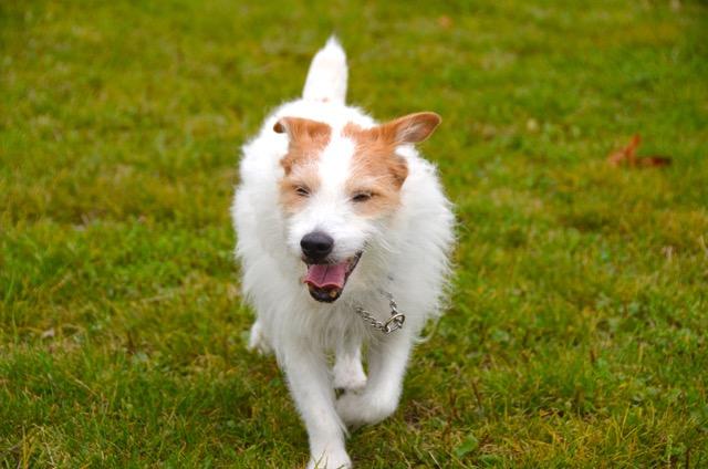 2度目のイギリス旅レポート その2 (ロンドンで犬と散歩)_c0099133_13231424.jpg