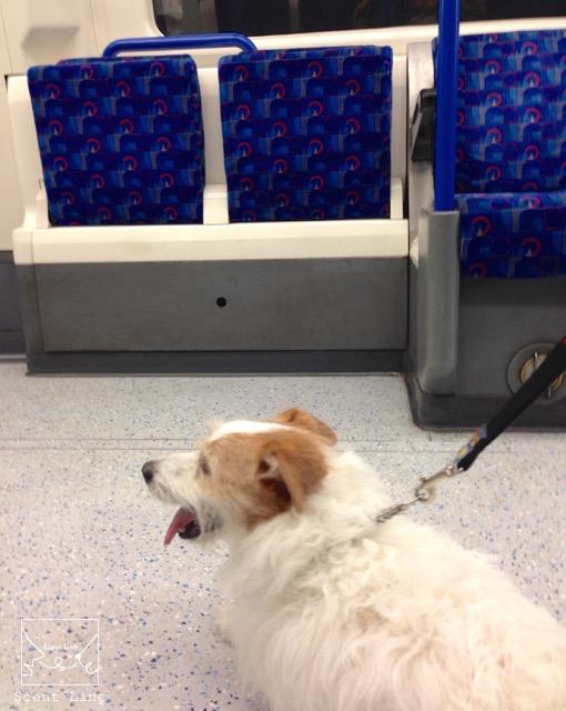 2度目のイギリス旅レポート その2 (ロンドンで犬と散歩)_c0099133_13304012.jpg