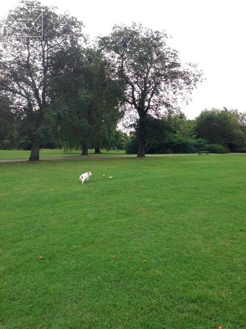 2度目のイギリス旅レポート その2 (ロンドンで犬と散歩)_c0099133_1333312.jpg
