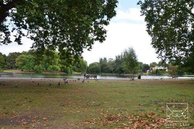 2度目のイギリス旅レポート その2 (ロンドンで犬と散歩)_c0099133_13383728.jpg