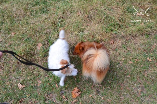 2度目のイギリス旅レポート その2 (ロンドンで犬と散歩)_c0099133_13483926.jpg