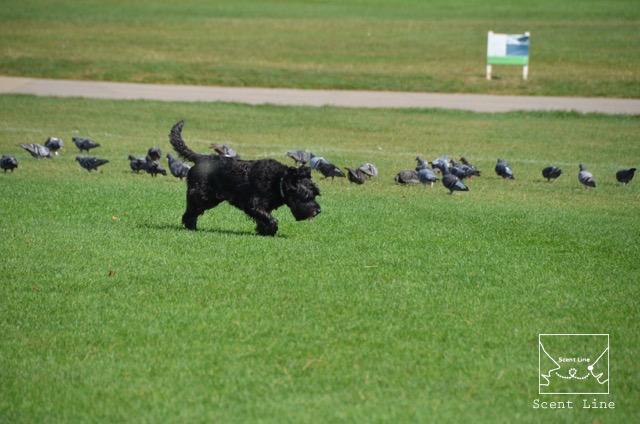 2度目のイギリス旅レポート その2 (ロンドンで犬と散歩)_c0099133_13511393.jpg