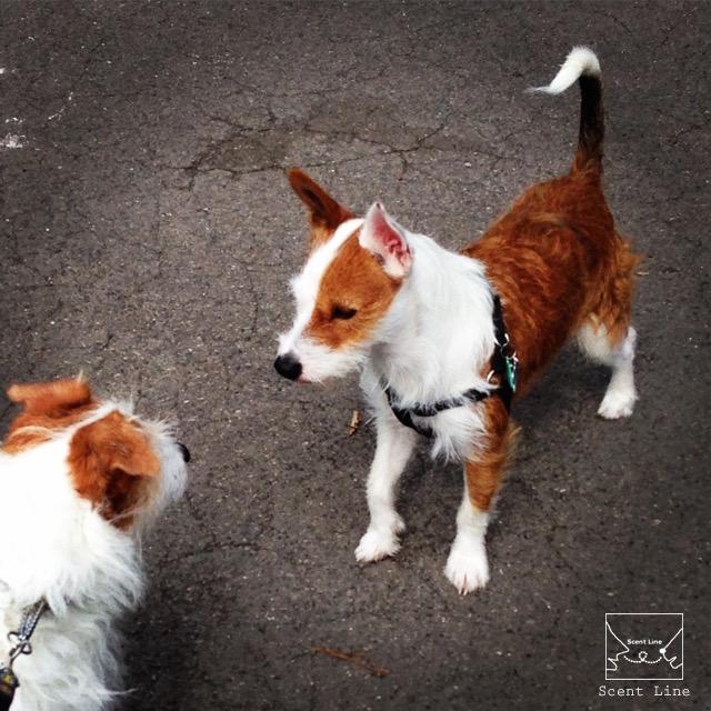 2度目のイギリス旅レポート その2 (ロンドンで犬と散歩)_c0099133_13521930.jpg