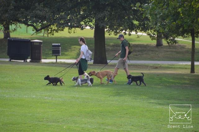 2度目のイギリス旅レポート その2 (ロンドンで犬と散歩)_c0099133_13552637.jpg