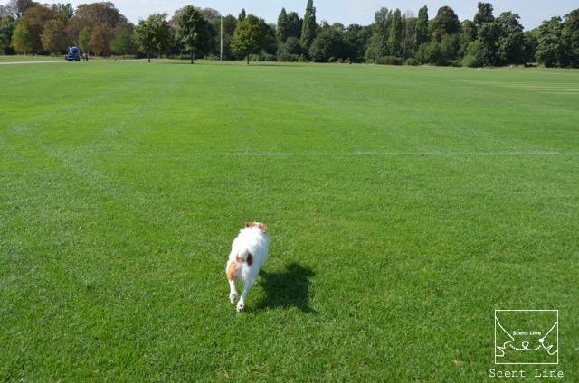2度目のイギリス旅レポート その2 (ロンドンで犬と散歩)_c0099133_14133512.jpg