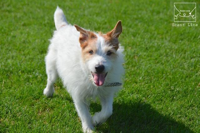 2度目のイギリス旅レポート その2 (ロンドンで犬と散歩)_c0099133_14135367.jpg