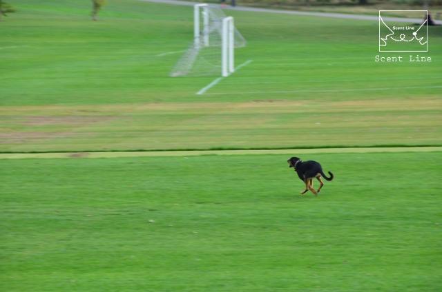 2度目のイギリス旅レポート その2 (ロンドンで犬と散歩)_c0099133_142650.jpg