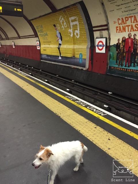 2度目のイギリス旅レポート その2 (ロンドンで犬と散歩)_c0099133_374247.jpg