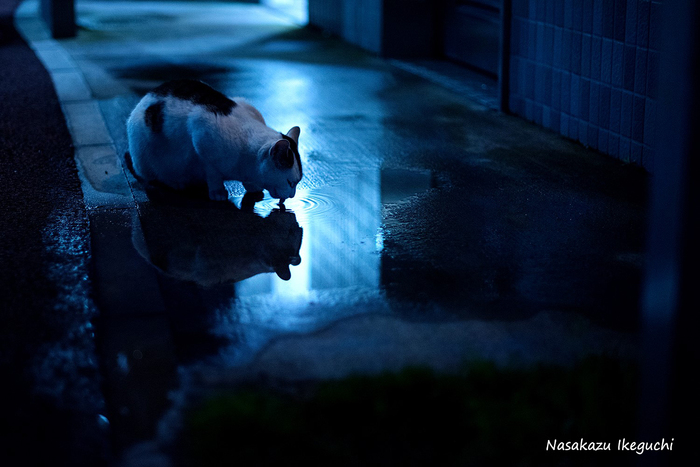 横浜赤レンガ倉庫 ねこ写真展 2016  ~今を生きる猫たちのキロク・キオク~_c0194541_20102581.jpg
