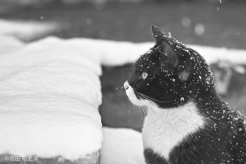 横浜赤レンガ倉庫 ねこ写真展 2016  ~今を生きる猫たちのキロク・キオク~_c0194541_201301.jpg