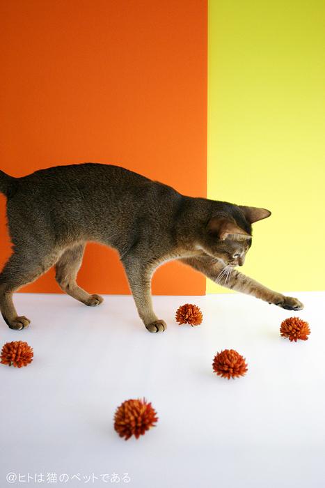横浜赤レンガ倉庫 ねこ写真展 2016  ~今を生きる猫たちのキロク・キオク~_c0194541_20142644.jpg