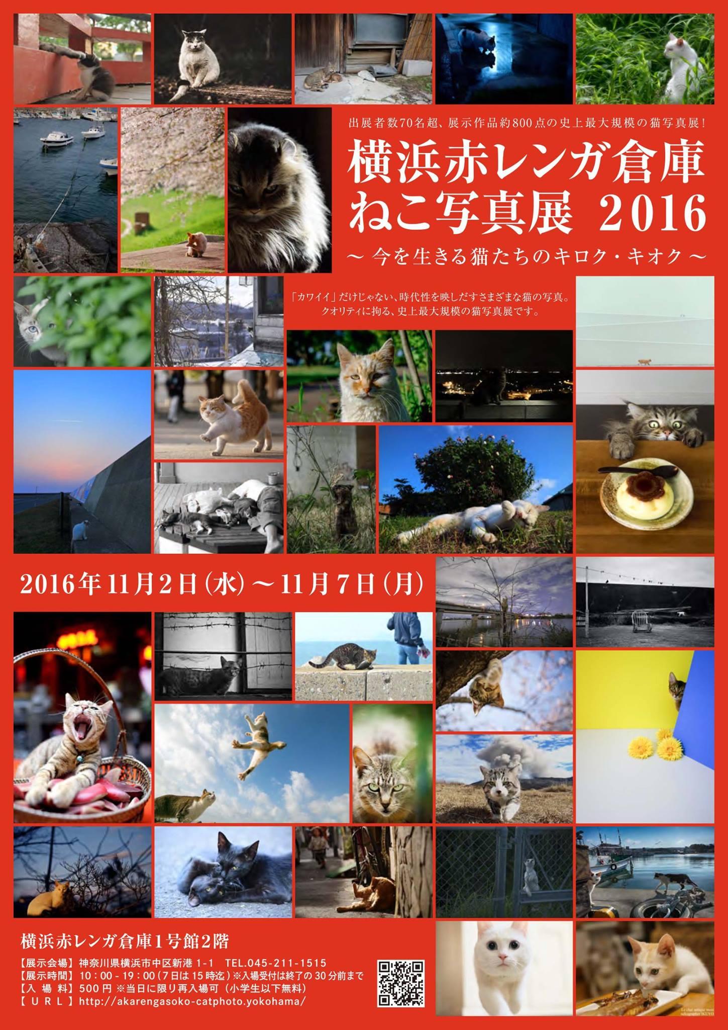 横浜赤レンガ倉庫 ねこ写真展 2016  ~今を生きる猫たちのキロク・キオク~_c0194541_2093118.jpg