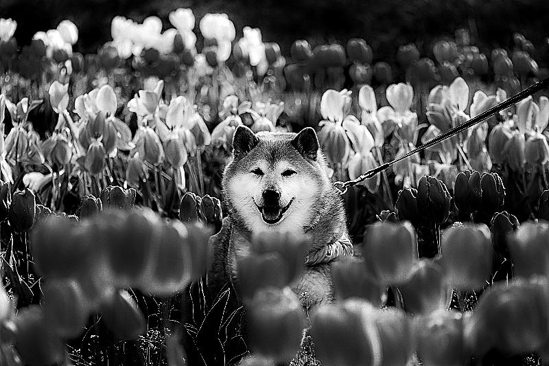 春モ夏ノ秋ク冬ロ_b0314043_09042707.jpg