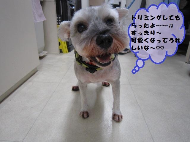 【スズメバチに刺されてしまった犬】_b0059154_1848446.jpg