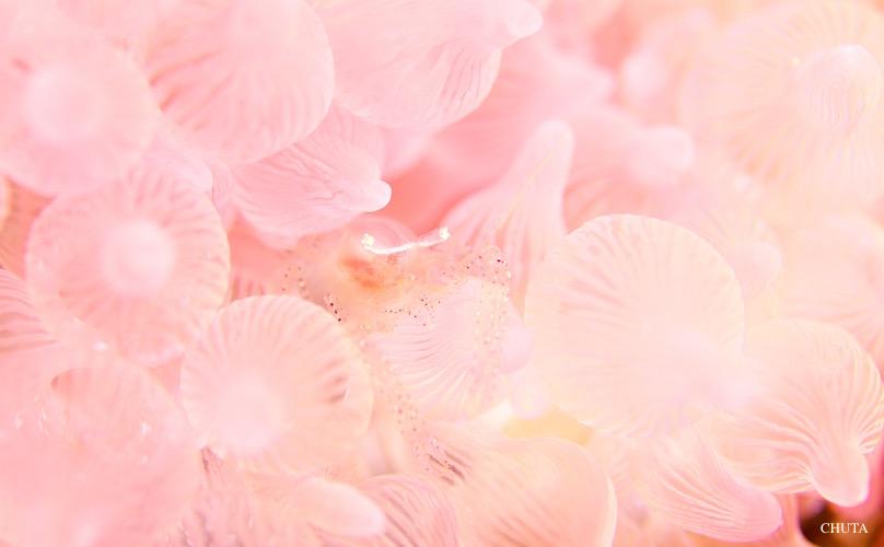 ピンク対決☆みなべ・田辺_e0158261_7175131.jpg