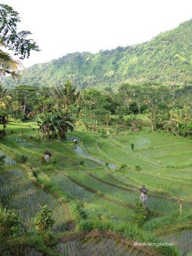 田んぼの草むしりと人間が自然の中で生きることについて考えたこと_a0120328_20095448.jpg