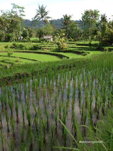 田んぼの草むしりと人間が自然の中で生きることについて考えたこと_a0120328_20102158.jpg