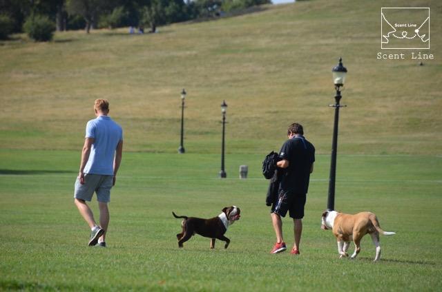 2度目のイギリス旅レポート その2 (ロンドンで犬と散歩)_c0099133_814396.jpg
