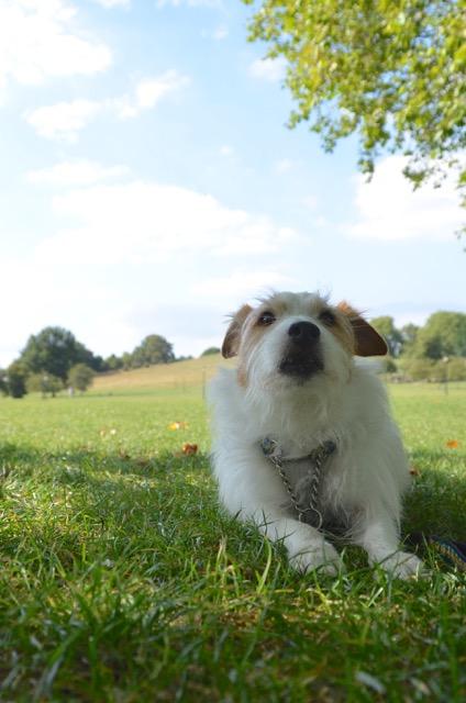 2度目のイギリス旅レポート その2 (ロンドンで犬と散歩)_c0099133_8154312.jpg