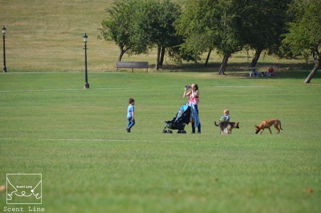 2度目のイギリス旅レポート その2 (ロンドンで犬と散歩)_c0099133_8214426.jpg