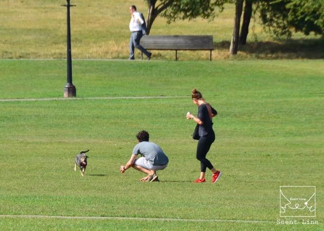 2度目のイギリス旅レポート その2 (ロンドンで犬と散歩)_c0099133_8221798.jpg