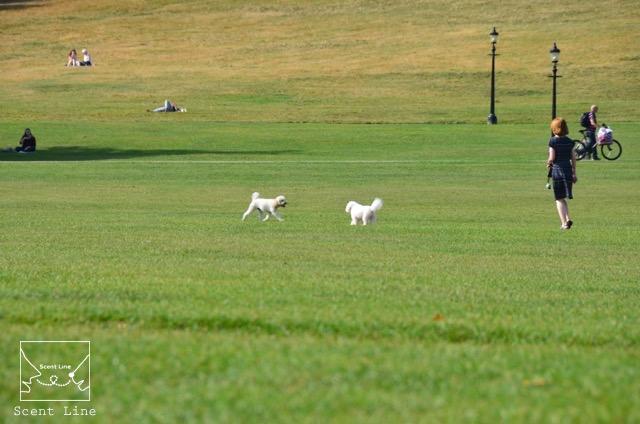 2度目のイギリス旅レポート その2 (ロンドンで犬と散歩)_c0099133_864070.jpg