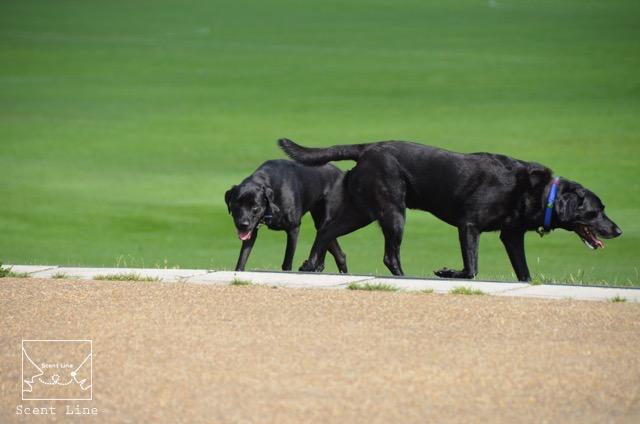 2度目のイギリス旅レポート その2 (ロンドンで犬と散歩)_c0099133_89074.jpg