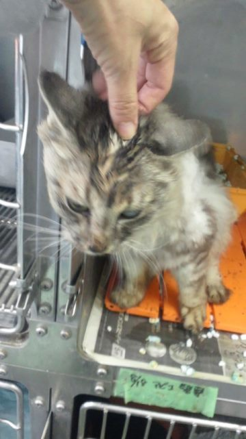 【移動先募集】センター(支所)収容猫(10/21訪問)_f0242002_00473637.jpg