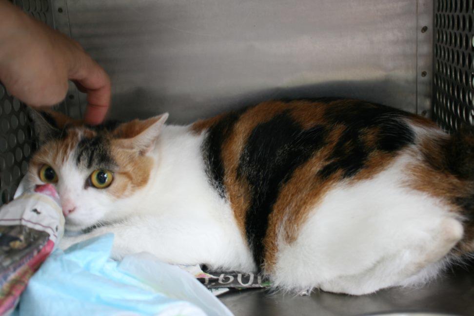 【移動先募集】センター(支所)収容猫(10/21訪問)_f0242002_00533152.jpg