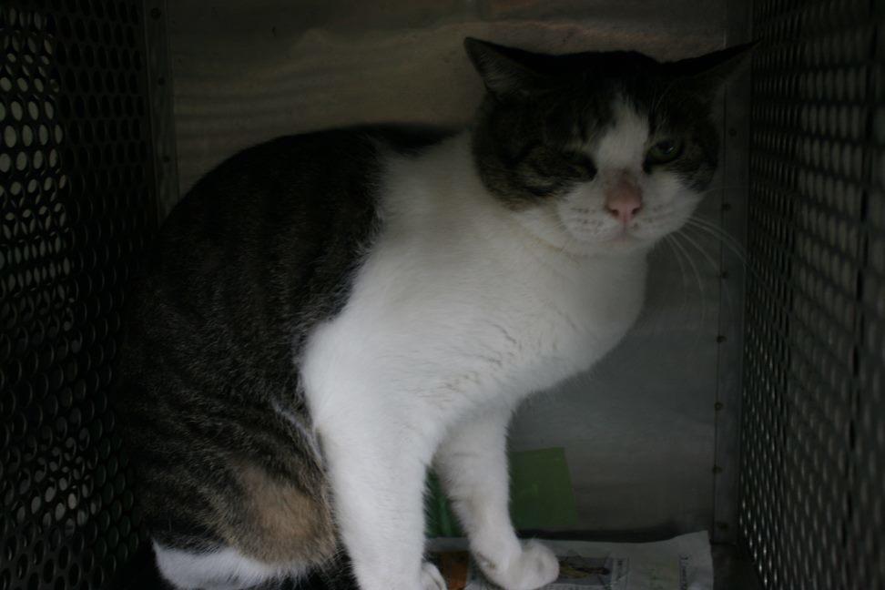 【移動先募集】センター(支所)収容猫(10/21訪問)_f0242002_00542301.jpg