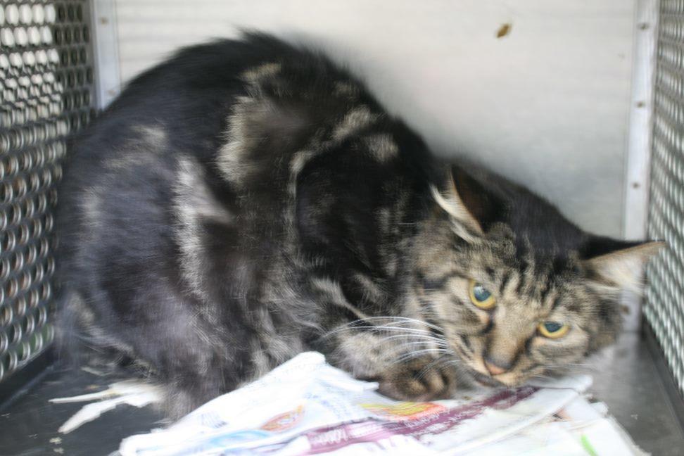 【移動先募集】センター(支所)収容猫(10/21訪問)_f0242002_00550113.jpg