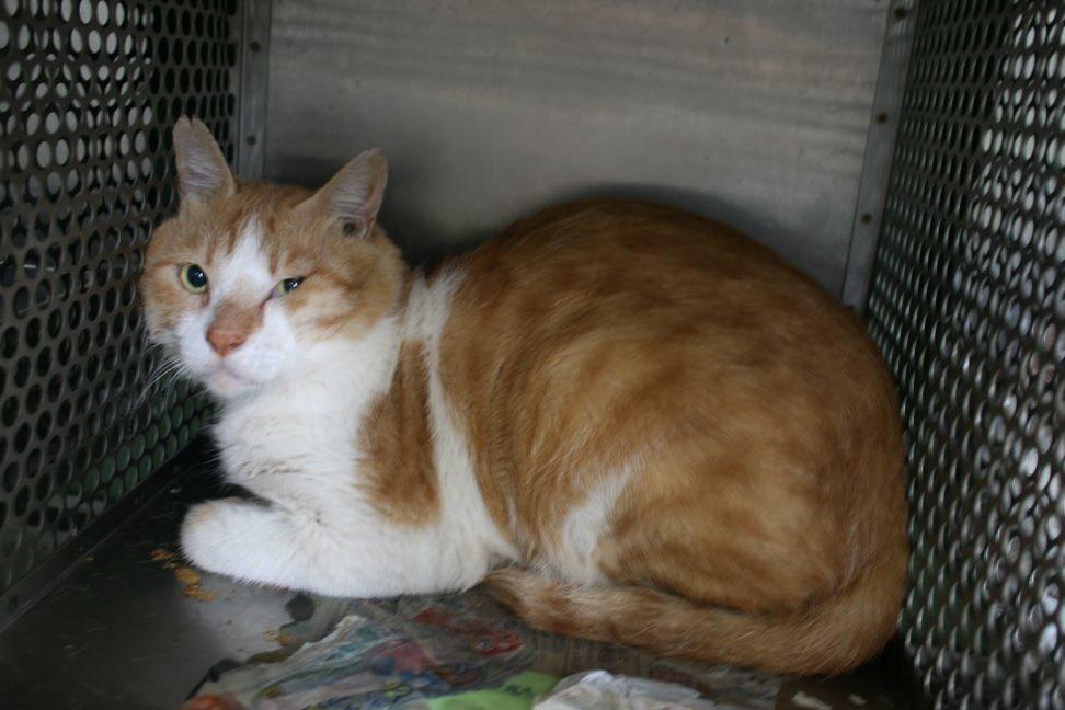 【移動先募集】センター(支所)収容猫(10/21訪問)_f0242002_00581981.jpg