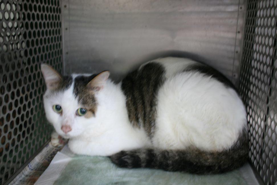 【移動先募集】センター(支所)収容猫(10/21訪問)_f0242002_00582651.jpg