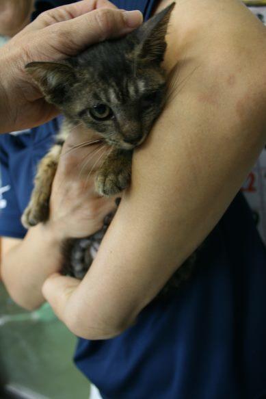 【移動先募集】センター(支所)収容猫(10/21訪問)_f0242002_01065718.jpg
