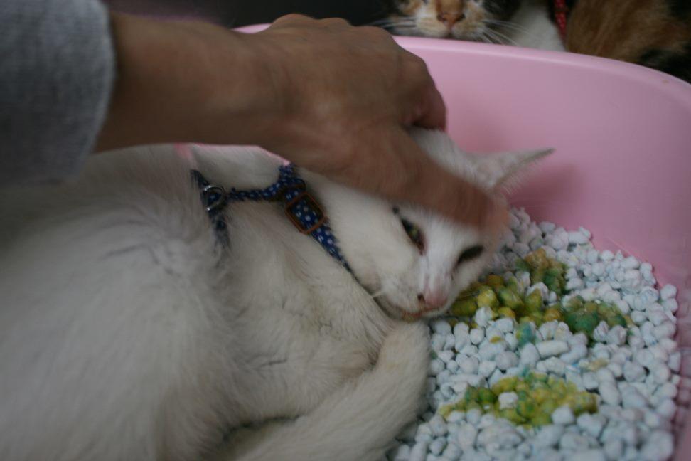 【移動先募集】センター(支所)収容猫(10/21訪問)_f0242002_01081382.jpg