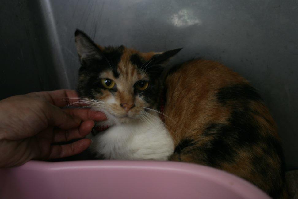 【移動先募集】センター(支所)収容猫(10/21訪問)_f0242002_01090069.jpg