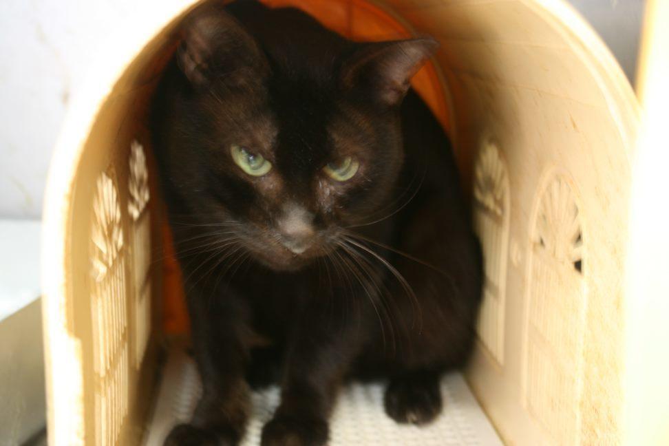 【移動先募集】センター(支所)収容猫(10/21訪問)_f0242002_21241508.jpg
