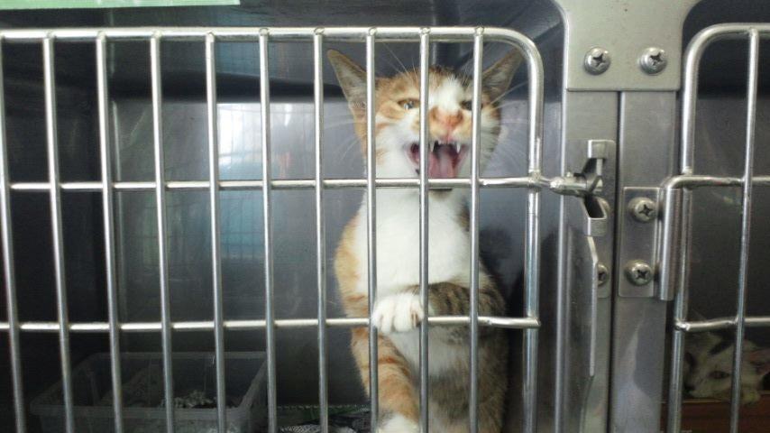 【移動先募集】センター(支所)収容猫(10/21訪問)_f0242002_21263435.jpg