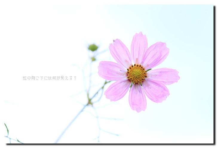 b0191204_16202176.jpg