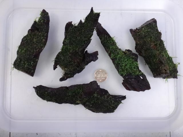 161006 熱帯魚・淡水魚・金魚・水草_f0189122_1343380.jpg
