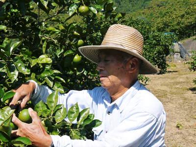 無農薬栽培の種なしかぼす大好評販売中!今年はかぼす不足⁉例年以上の超ハイペース!ご注文はお早めに!_a0254656_1805510.jpg