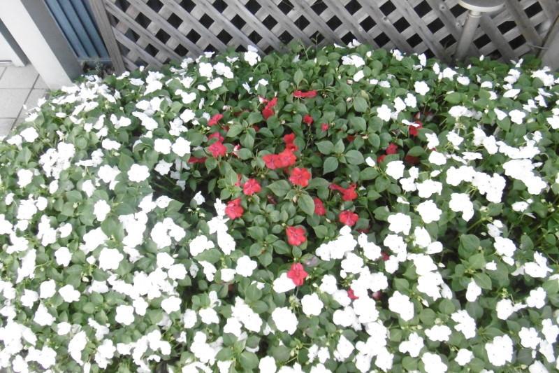 今日の花壇_f0205367_17465440.jpg