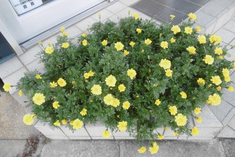今日の花壇_f0205367_17521133.jpg