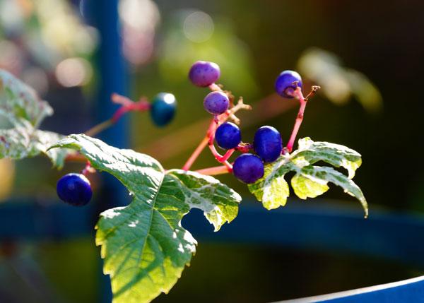 秋の花_d0162994_915325.jpg