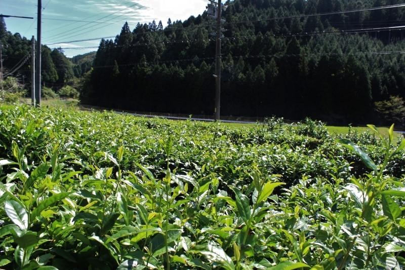 紅茶を追っかけて、豊田_b0220318_00281966.jpg