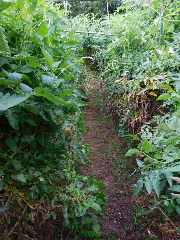 畑から、1年がかりの「トマトソース」作り_a0125419_20055330.jpg